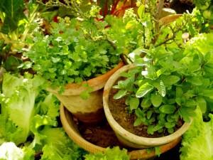 1-1-1.herb_03