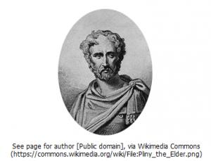 大プリニウス