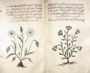 古代ローマ時代のディオスコリデスによる本草書『薬物誌』のアラビア語訳版。クミンとディルが描かれている。