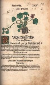 オットー・ブルンフェルスの著書『Contrafayt Krauterbuch 』(1532-1537)