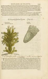 ジョン・ジェラード 『本草書または植物の話』
