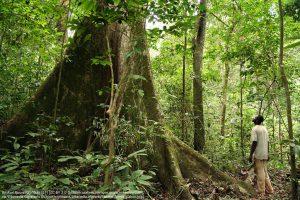 熱帯雨林(ガボン)