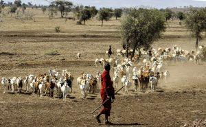 セレンゲティのマサイ族
