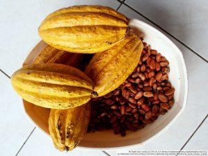 カカオの果実と、中に詰まっている豆