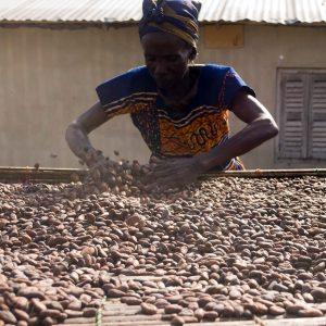 カカオ豆の生産のために働く女性(ガーナ)