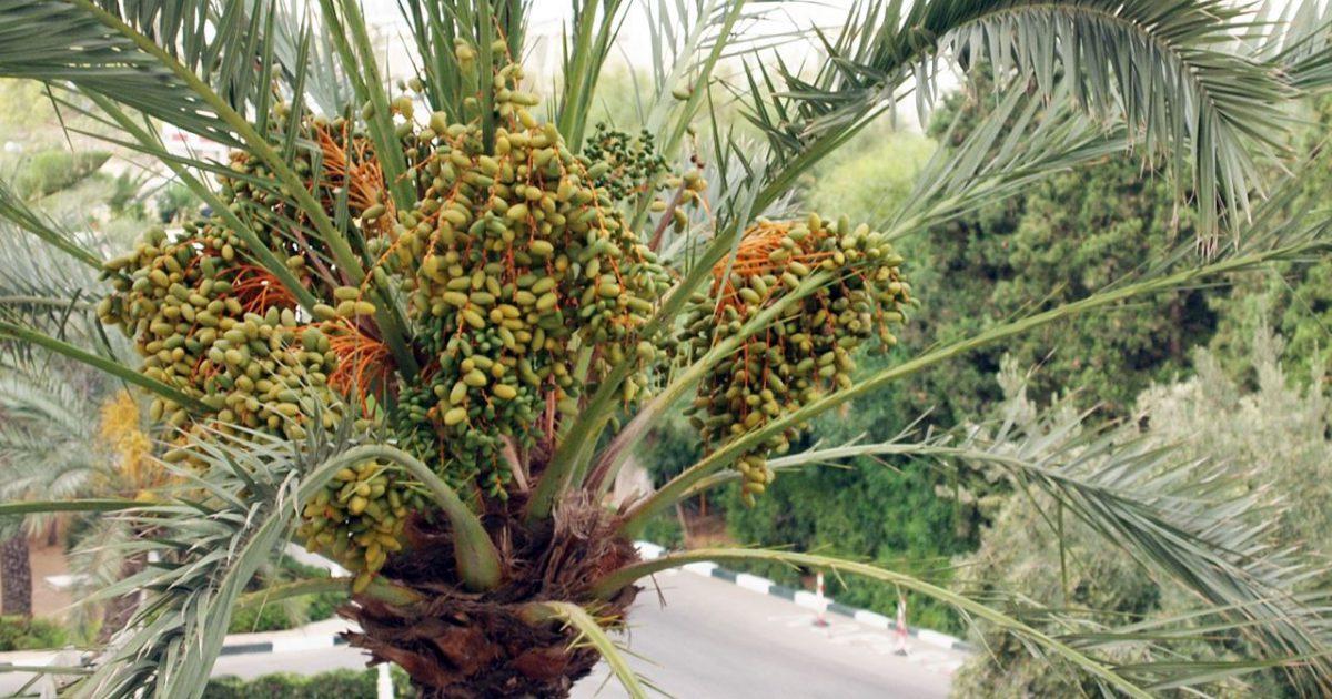 アフリカのハーブ II ~ アフリカ大陸の植生とハーブ