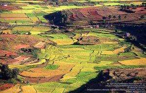 マダガスカル中央高地の棚田