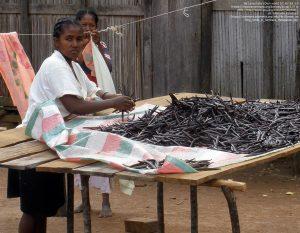 ヴァニラを選別する女性(Sambava、マダガスカル)