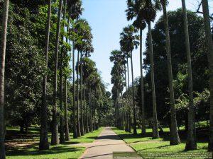 ペーラーデニヤ植物園・並木道