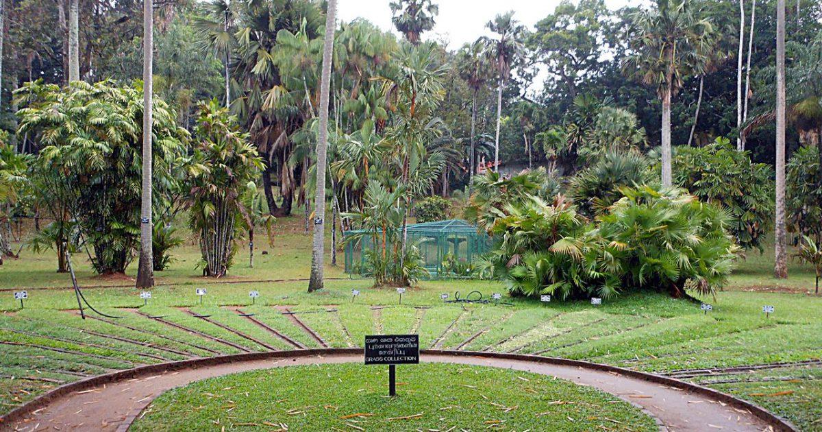 ペーラーデニヤ植物園(スリランカ・キャンディ)