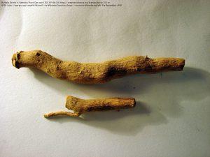 インドジャボク(ラウオルフィア)の根