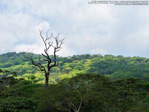 シンハラジャ森林保護区(スリランカ)の林冠(りんかん、森林の最上層)