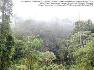 シンハラジャ森林保護区・霧の朝の風景
