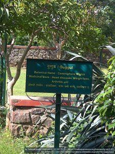 グッグルの表札/医学的な適用も記載されている(インド・プネー(Pune))