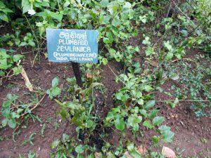 ペーラーデニヤ植物園内のハーブ・ガーデンの一角