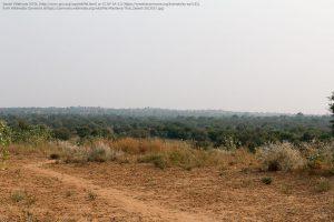 インド・タール砂漠のステップ(草原)