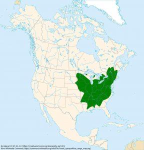 アメリカチョウセンニンジンの生息地(緑色)