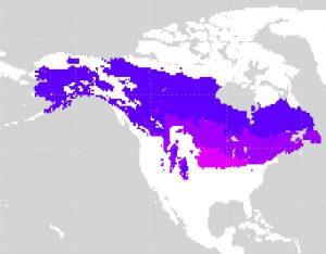 北アメリカの亜寒帯湿潤気候の位置(赤紫:Dfa、青紫色:Dfb、青色:Dfc)