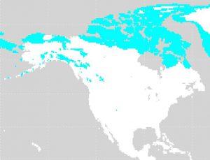 北アメリカのツンドラ気候の位置(水色:ET)
