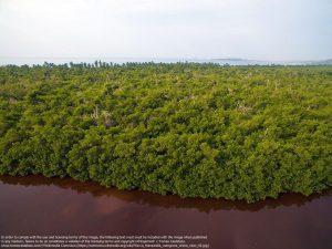 マングローブの森(ラ・マンザニータ / メキシコ)
