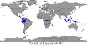 世界の熱帯雨林(Af)の地域(青色)