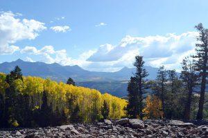 ロッキー山脈のアスペンの林(画面左側の黄色い葉の樹木)(コロラド州)