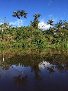 """アマゾン川流域の""""アマゾン熱帯雨林"""""""