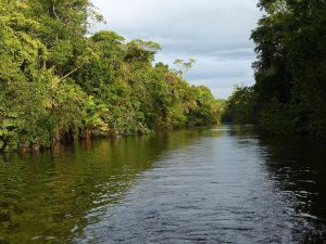 熱帯雨林(コスタリカ)