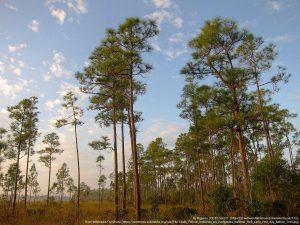 フロリダ半島南端の「エバーグレース国立公園」(フロリダ州)
