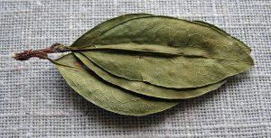 ひとつの茎から出た3つの葉(ケチュア族の文化で幸運とされる)
