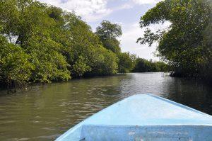 マングローブの林の中の川を行くボート(ドミニカ共和国)