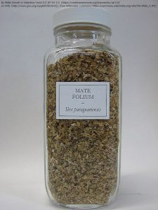 乾燥させたマテの葉:健康のために利用される。