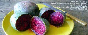 """フルーツのように食べられる """"Tuna"""" (パレーラの果実)"""