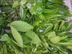 スパイスとして販売されるオールスパイスの葉