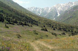 アクス=ジャバグリ自然保護区内のジャバグリ山脈 / ビャクシン属(Juniperus)の樹木が見える。
