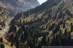 背の高い樹木が並ぶ / カザフスタン南東部の町アルマトイの近く・アラタウ山脈