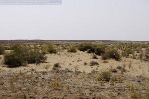 キジルクム砂漠(ウズベキスタン)