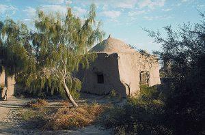 古い霊廟(れいびょう:先祖の霊をまつった建物)の前の、サクソールの木(トゥルクメニスタン)