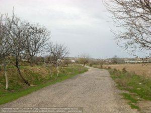 低木が見られる郊外の道端(タシケント・ウズベキスタン)