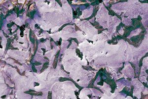 永久凍土の地表