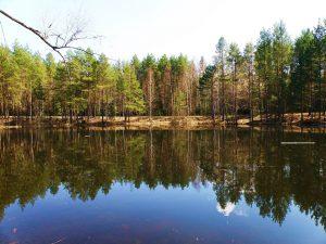 夏の針葉樹林帯(ロシア)