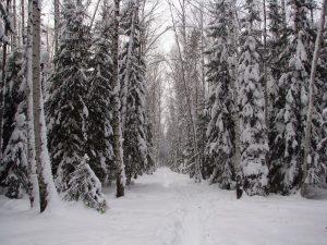 ロシアの冬のタイガ