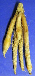オオバンガジュツの根茎