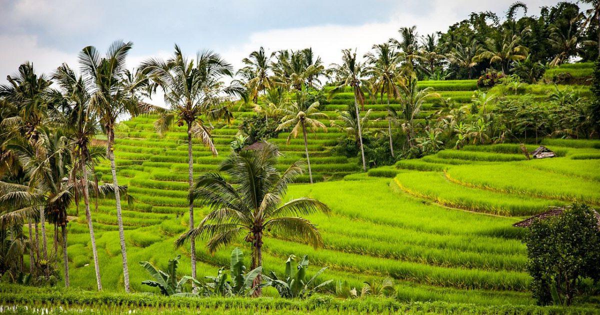 東南アジアの風土:バリ島の棚田