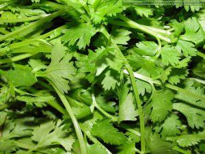 コリアンダーの葉