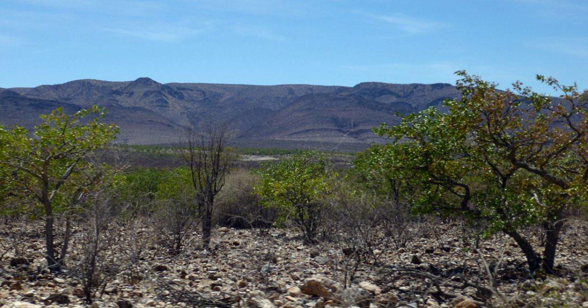 アフリカのハーブ I ~ アフリカの地理と気候・風土